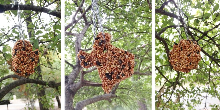 bird feeders hanging in tree