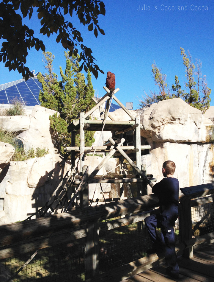 fort worth zoo apes