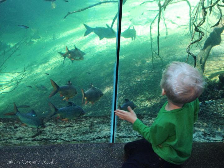 fort worth zoo fish