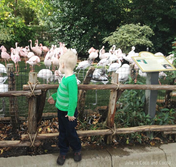 fort worth zoo flamingos