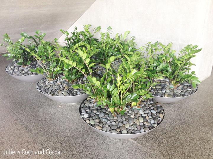 modern art museum fort worth empty modern plants