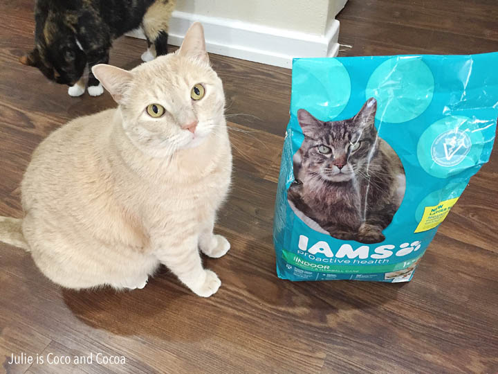 iams cats ranger cat food