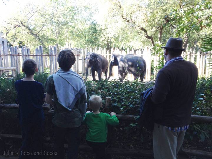 The Fort Worth Zoo in the fall