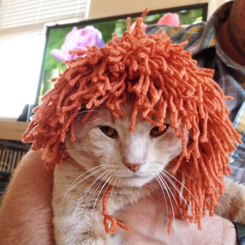 Lion costumes for my cats