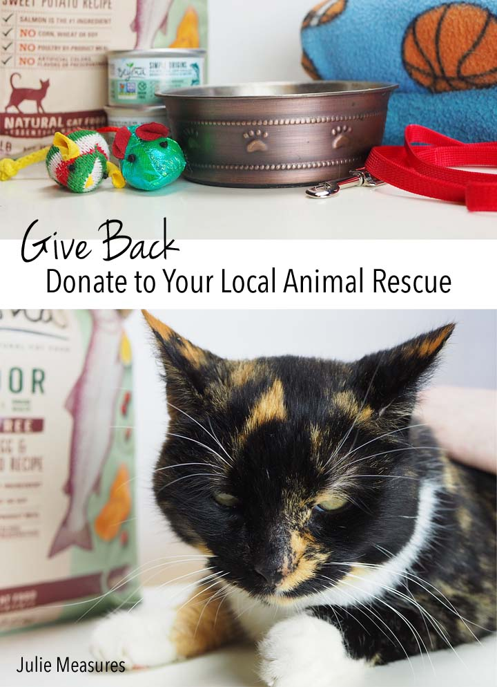 Give Back and Donate to Your Local Animal Rescue