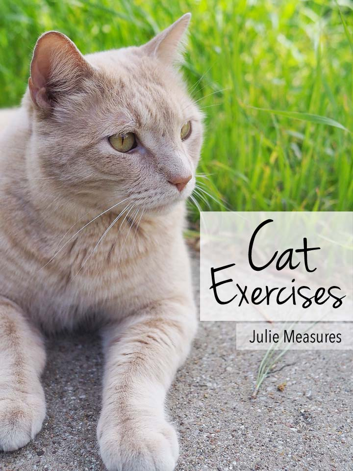 5 Cat Exercises To Get Your Cat Moving