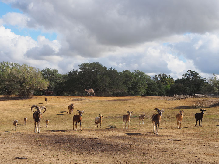 Hatari Wildlife Park