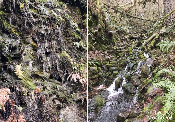 Trail of Ten Falls Hike